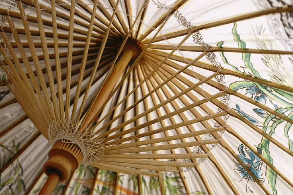 Bamboo and umbrella